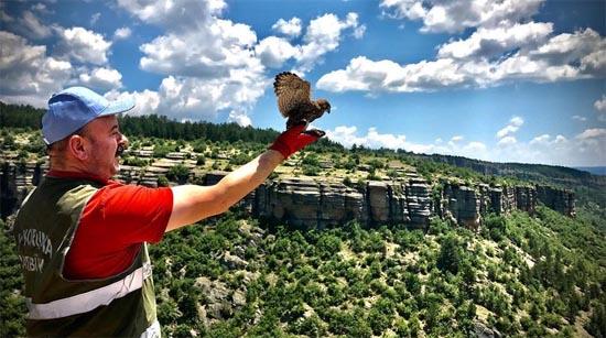 Yaralı 'kerkenez' kuşu tedavisinin ardından doğaya salındı