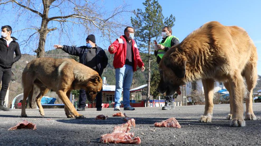 Sokak hayvanları için bir araya geldiler